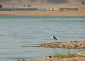 Africa. Lonely heron on the banks of the Nile. — Stock Photo