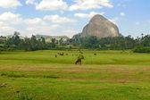 Africa, Ethiopia. Mountains amazing shape. Pasture. Horses are eating grass. — Stock Photo