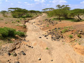 Dry riverbed. Not far away forest. Africa, Kenya. — Stock Photo