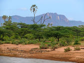River and trees around. Mountains in the background. Africa. Kenya. — Stock Photo