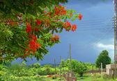 De nederzetting. bloeiende bomen met rode bloemen. tanzania, afri — Stockfoto