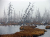 Landscape nature. Heavy fog hanging over the river. Gloomy autum — Stock Photo