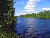 Landscape nature. The river on a background of cedar forests. — Stock Photo
