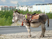 Zoo in the city of Nadym. Pony is on the road. — Stock Photo