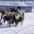 NADYM, RUSSIA - MARCH 17, 2006: Racing on deer during holiday of — Stock Photo #49450997