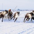 NADYM, RUSSIA - MARCH 18, 2006: Racing on deer during holiday of — Stock Photo #49451005