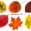 Autumn leaves on a white background — Photo