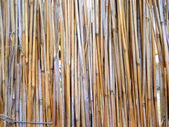 Cane dry — Stock Photo
