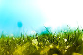 Dew Drops on Grass in the Morning Sun — Stock Photo