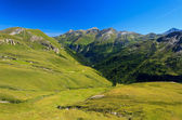 Green meadow in alpine valley — Stock Photo
