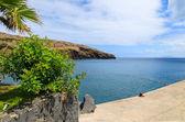 Promenady palma drzewa widokiem na ocean — Zdjęcie stockowe