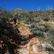 Hike in Saguaro National Park — Stock Photo