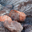 Petrified tree — Stock Photo #35706841