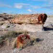 Petrified tree — Stock Photo #35706855