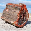 Stock Photo: Petrified tree