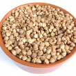 Buckwheat — Stock Photo #12792038