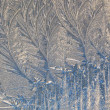 Winter-pattern — Stock Photo
