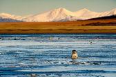 Seals in the sea lagoon — Stock Photo