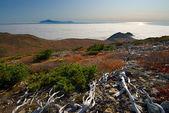 Морской туман — Стоковое фото