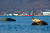 Seal in the port — Stockfoto