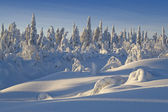 Northern Ural Mountains. Fantastic snow figures on trees. Frosty morning on border with Siberia. — Stock Photo