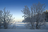 Winter landscape with frosted — Stock Photo