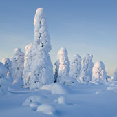 Northern Ural Mountains. Fantastic snow figures on trees. Frosty morning on border with Siberia. — Foto de Stock