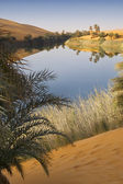 Morning in an oasis. Libyan Desert. Sandy dunes and lake of salty water. — Stock Photo
