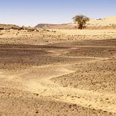 Oasis in Sahara Desert, Libya — Stock Photo