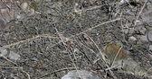 Red Sided Garter Snake Den in Narcisse Manitoba Canada — Stock Photo