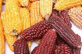 Multicoloras mazorcas de maíz — Foto de Stock