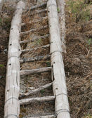 Wooden Bamboo Ladder — Stock Photo