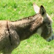 Donkey in a Pasture — Stock Photo