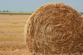 Straw Bale on Field — Stock Photo