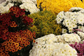 Assorted Cut Flowers — Stock Photo