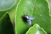 Occhio di una mosca su una foglia — Foto Stock