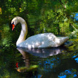Stock Photo: Fairy-tale about beautiful swans in pond