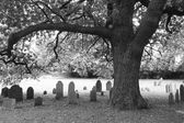Tree and gravestones — Stock Photo