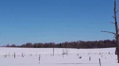 Snowy landscape — Stock Video