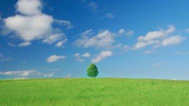 Single lone tree — Stock Video