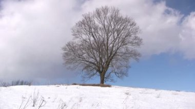 Lonely tree on winter — Stock Video