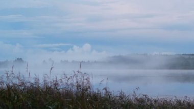 Birth of fog on the lake — Wideo stockowe