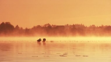 Dawn on the lake — Stock Video