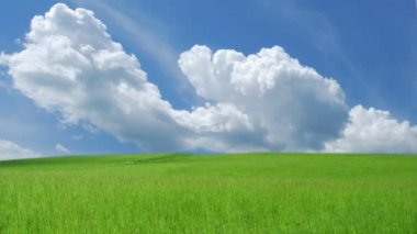 Blue sky with white clouds over green grass — Stock Video