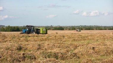 Harvest season — Stock Video