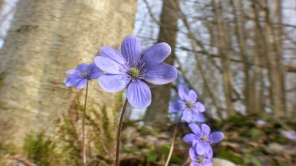 Flor de flores — Vídeo de stock