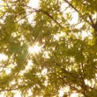 Sunlight through trees — Vídeo Stock #12718937