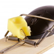 Computer mouse and mousetrap — Stock Photo #12938050