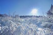 ロシアの冬 — ストック写真
