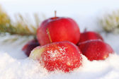 Red apples on snow — Stock Photo